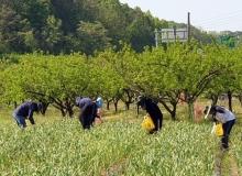 [영천]농작업용 얼음조끼 지원사업 추진